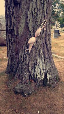 When taking your dog on a quick walk threw the graveyard down the street and you notice this provocative tree